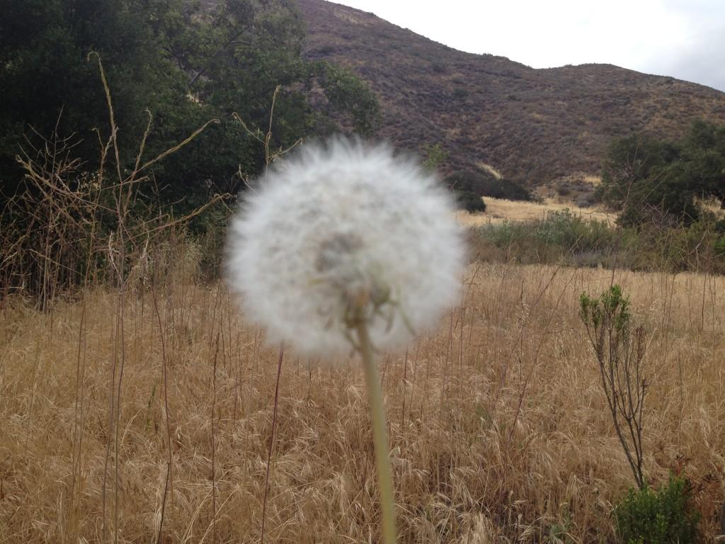 Flower in Hawk Canyon