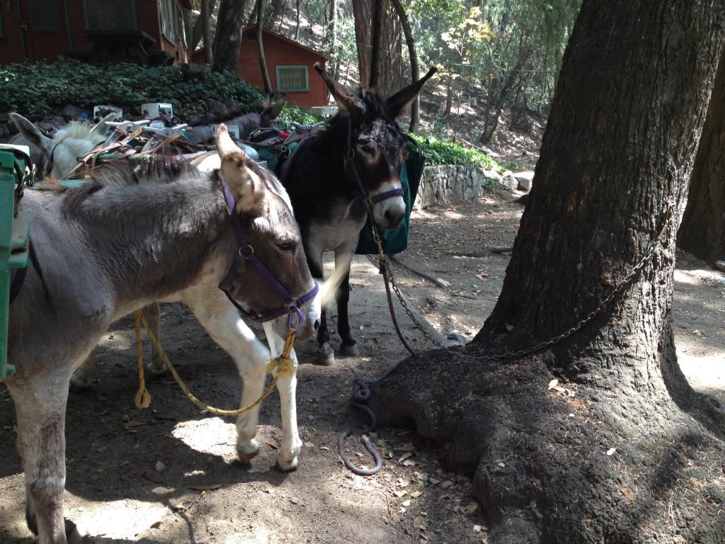 Donkey at Sturtevant Camp