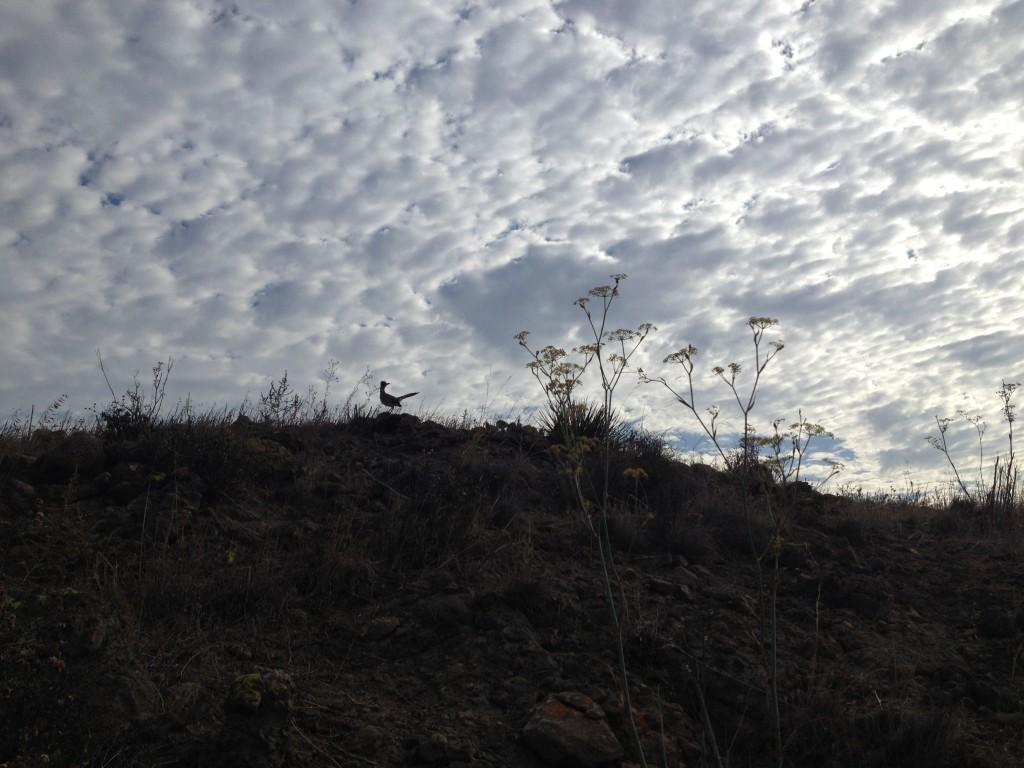 Roadrunner Ridge
